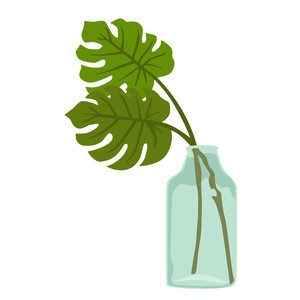 tropical monstera leaves in vase