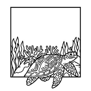 sea turtle square frame