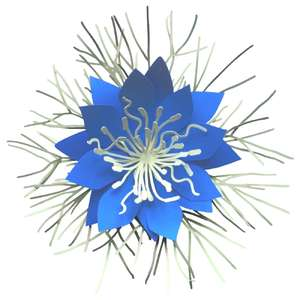 love in a mist 3d flower