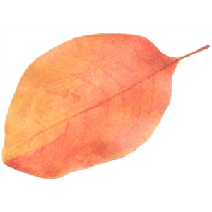 watercolor orange leaf