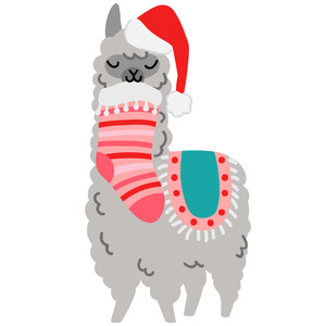 alpaca with stocking