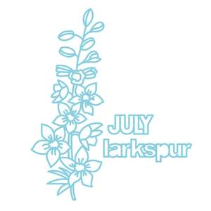 july flower larkspur