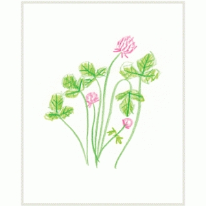 clover illustration print & frame