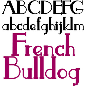 pn french bulldog