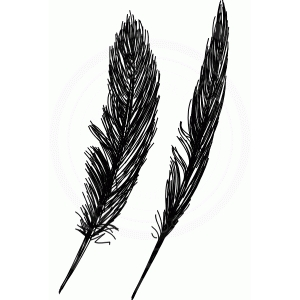 feathers (sketch)