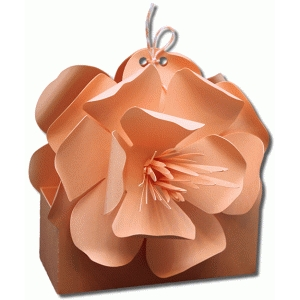 3d oklahoma evening primrose flower treat box