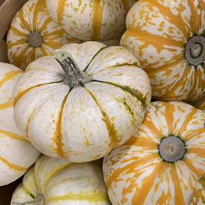 white pumpkins pattern