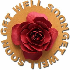get well soon sentiment flower