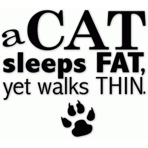 a cat is . . .