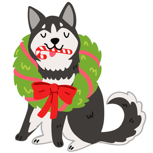 christmas husky dog