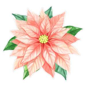 pink poinsettia flower watercolor
