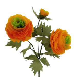 ranunculus  with green central