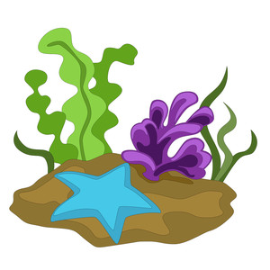 starfish and sea plants