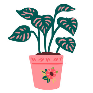 green and pink house plant