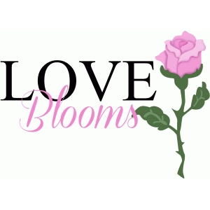 love blooms phrase with rose