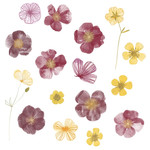 pressed flowers watercolor stickers