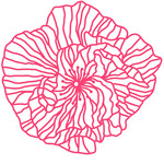 striped lace rose papercut
