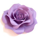 blooming rose 3d