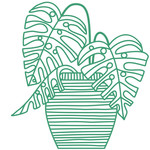 monstera tropical plant