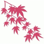 japanese maple branch